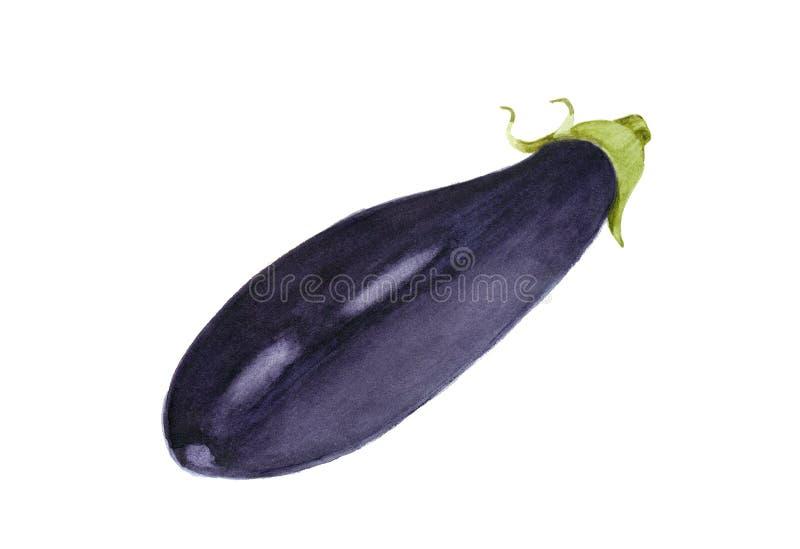 Hand dragen aubergine, vattenfärg illustration för matdesign stock illustrationer