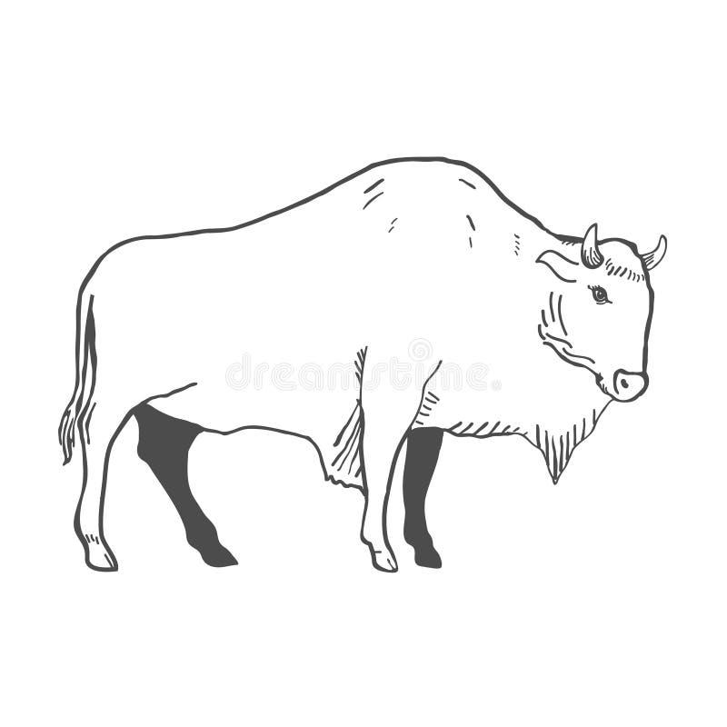 Hand dragen buffelillustration som isoleras på vit vektor stock illustrationer
