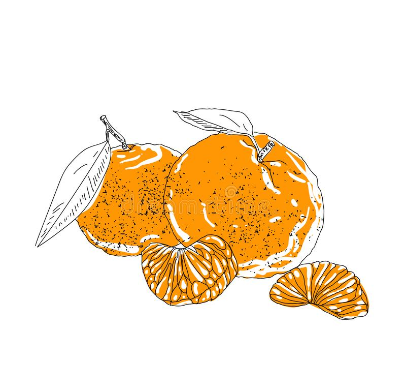 Hand dragen drink för vektorsommaris med cittrus Citron och mint Detoxvatten skissar Linjär illustration - Mappen för vektorn stock illustrationer
