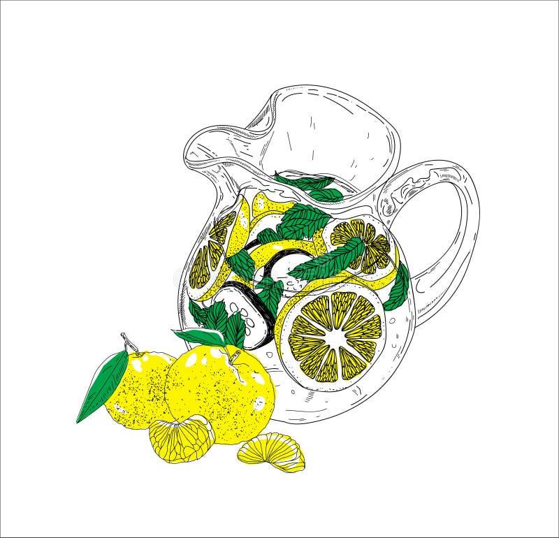 Hand dragen drink för vektorsommaris med cittrus Citron och mint Detoxvatten skissar Linjär illustration - Mappen för vektorn vektor illustrationer