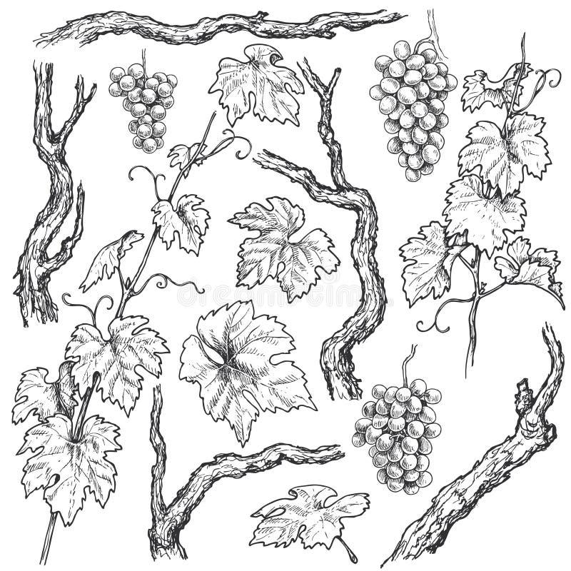 Hand dragen druvafilialer och vinrankauppsättning royaltyfri illustrationer