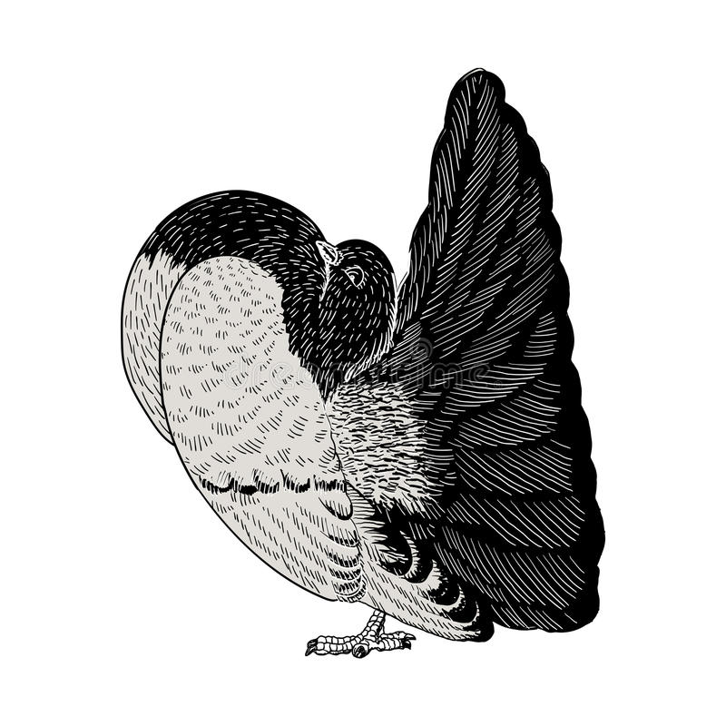 Hand dragen duvaillustration stock illustrationer