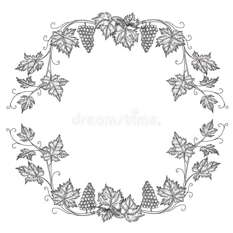 Hand dragen fastställd vektorillustration av filialdruvor Vinrankan skissar isolerat på vit bakgrund stock illustrationer