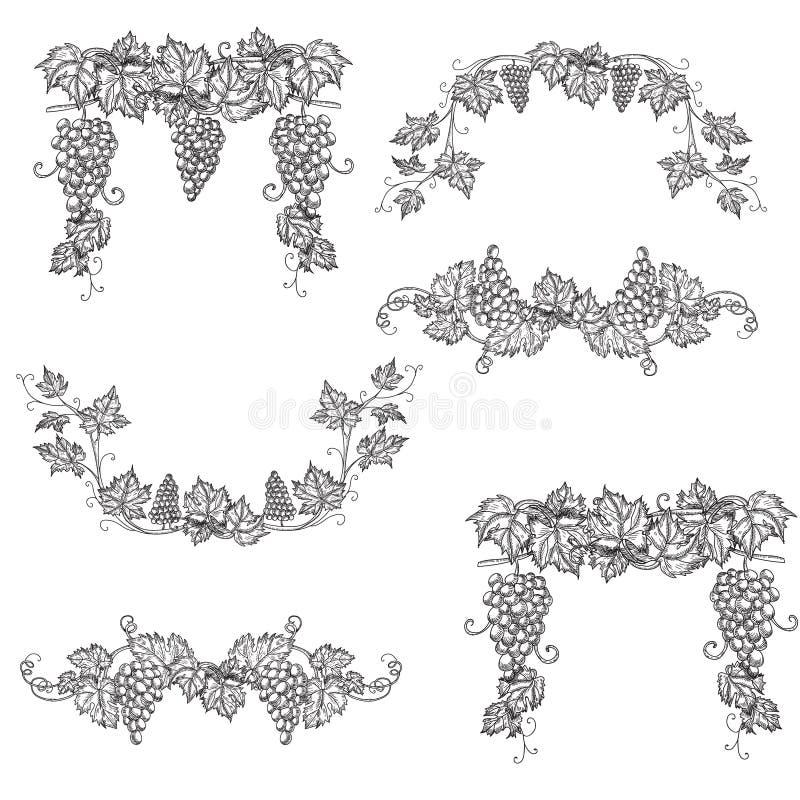 Hand dragen fastställd vektorillustration av filialdruvor Vinrankan skissar isolerat på vit bakgrund vektor illustrationer