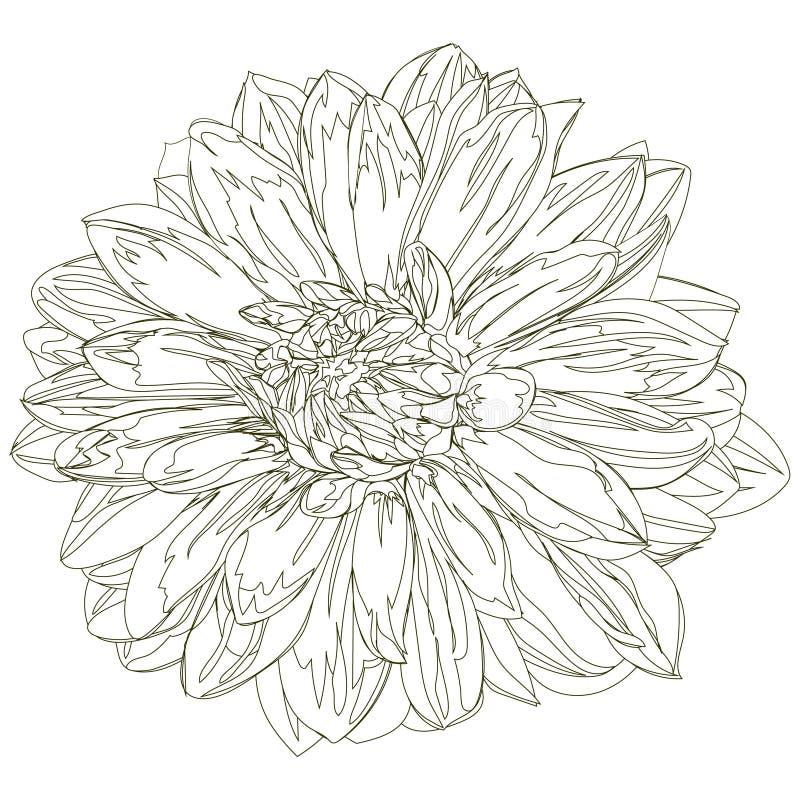 Hand dragen grafisk dahlia stock illustrationer
