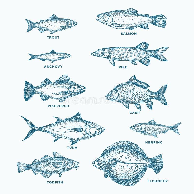 Hand dragen hav- eller havs- och för flod tio fiskuppsättning En samling av laxen och tonfisk eller pik och ansjovis, sill, forel stock illustrationer