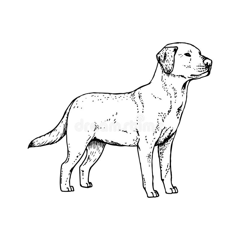 Hand dragen hund labrador Vektorn skissar royaltyfri illustrationer