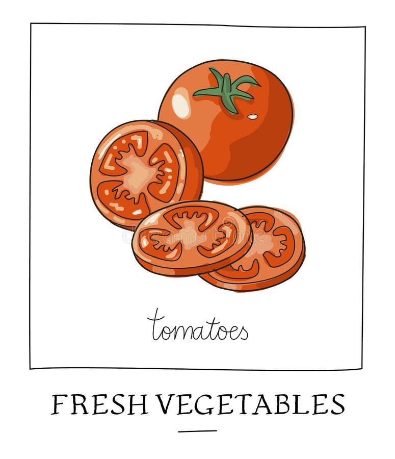 Hand dragen illustration av isolerade röda tomater brigham stock illustrationer