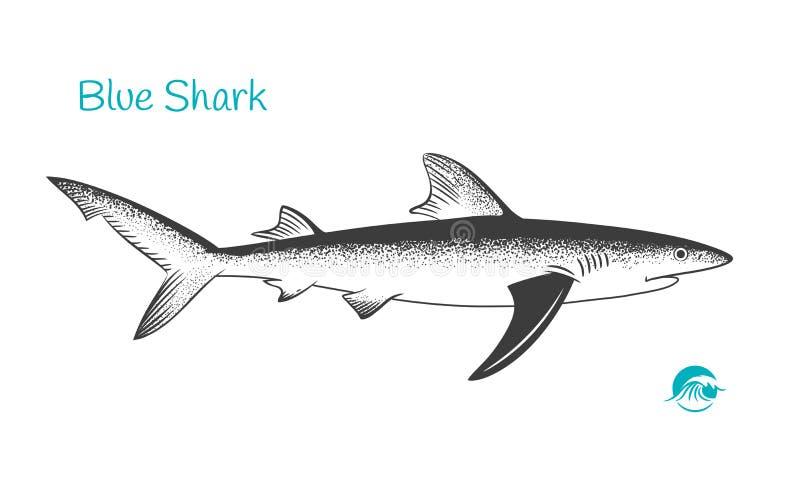Hand-dragen illustration för blå haj vektor illustrationer