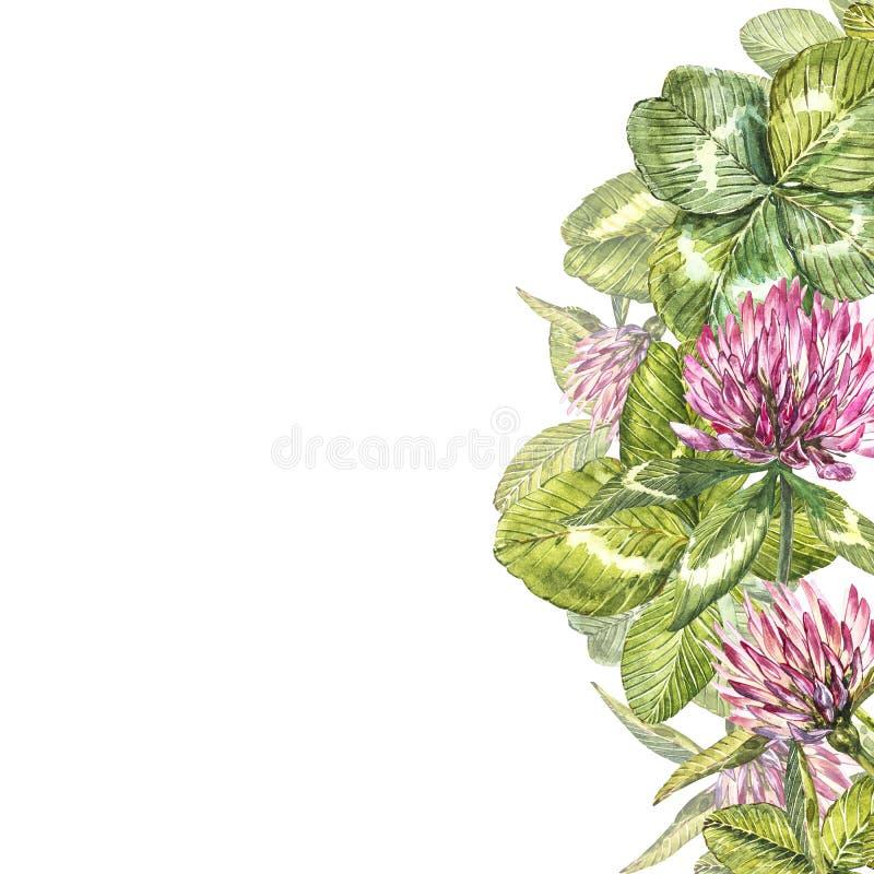 Hand-dragen illustration för blomma för röd växt av släktet Trifolium för vattenfärg Målat botaniskt tre-leaved änggräs som isole arkivfoton