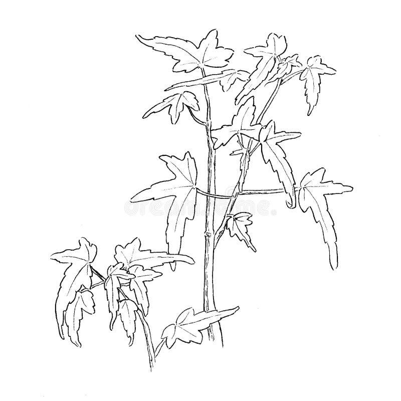 Hand-dragen illustration för växt begonia på vit bakgrund royaltyfri illustrationer