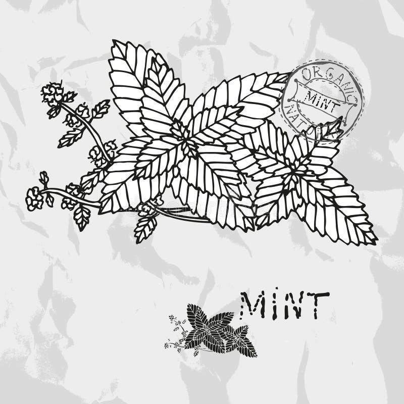 Hand dragen mintkaramell royaltyfri illustrationer