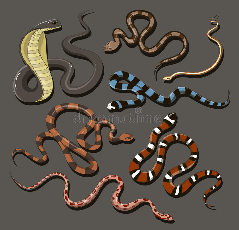 Hand dragen ormuppsättning stock illustrationer