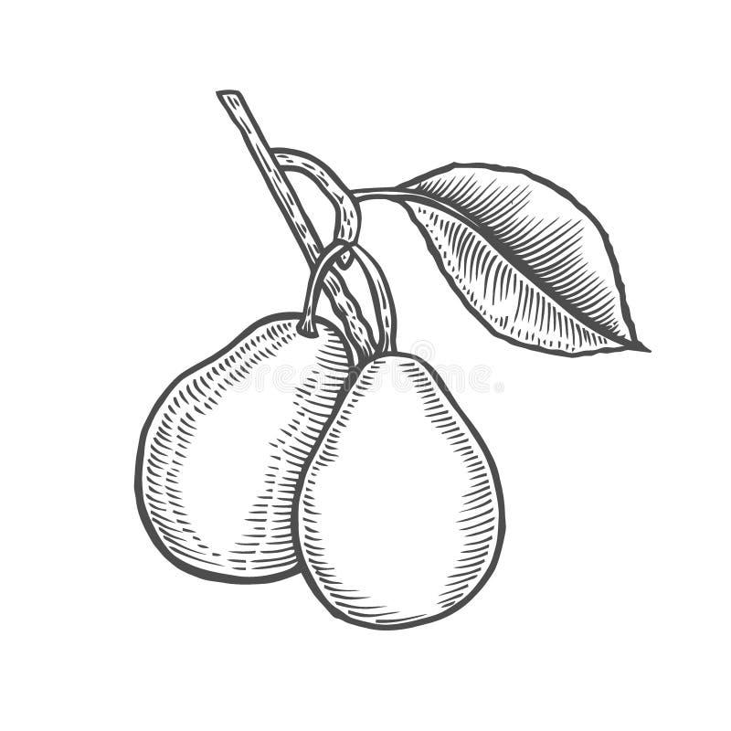 Hand dragen päronfilial vektor illustrationer
