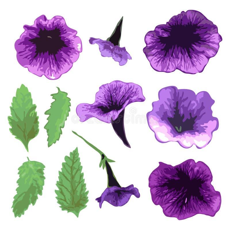 Hand dragen petuniauppsättning stock illustrationer