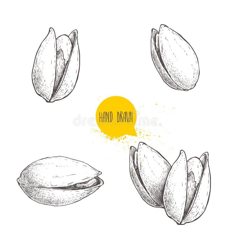 Hand dragen pistaschuppsättning Öppen och stekt ny organisk mat Singlar och grupp Tokiga vektorillustrationer som isoleras på vit vektor illustrationer