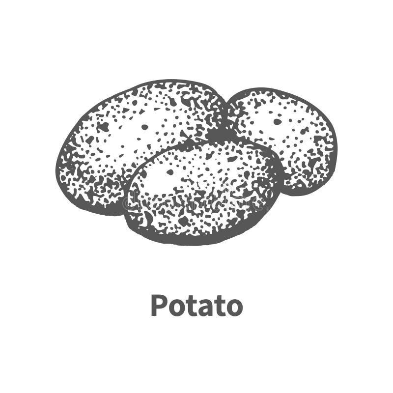 Hand-dragen potatis för vektor illustration stock illustrationer