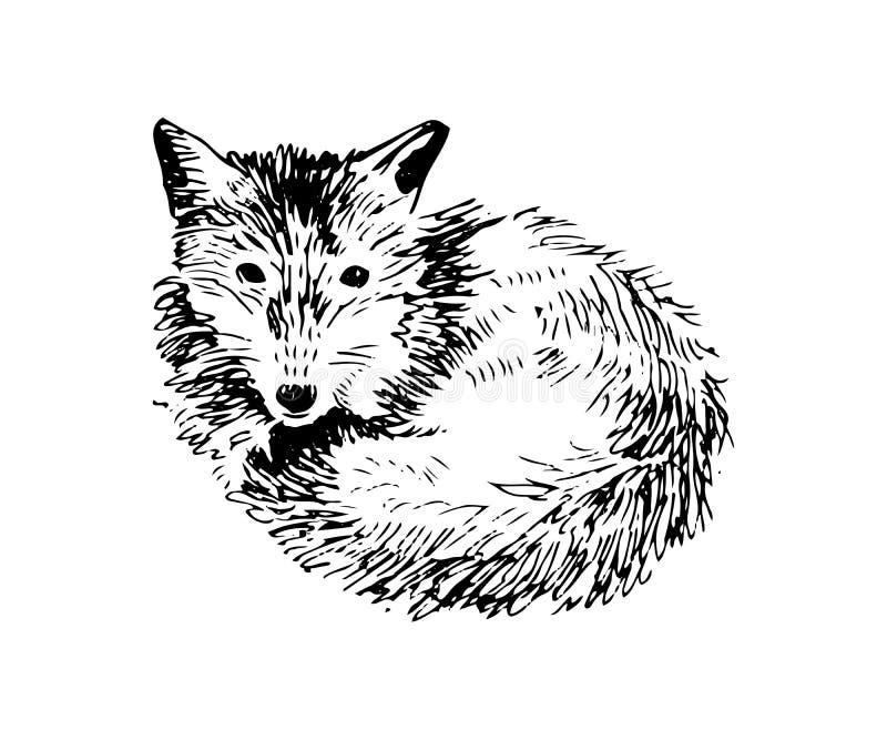 Hand dragen räv royaltyfri illustrationer