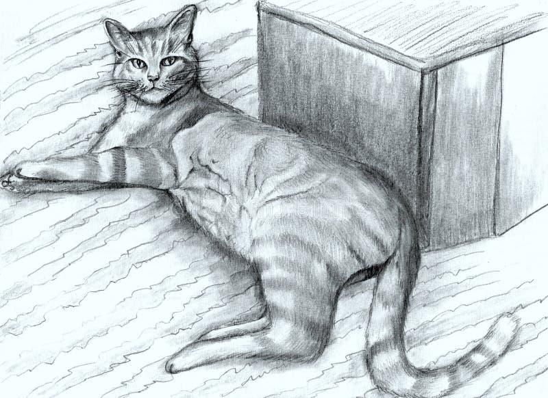 Hand-dragen randig katt royaltyfri foto