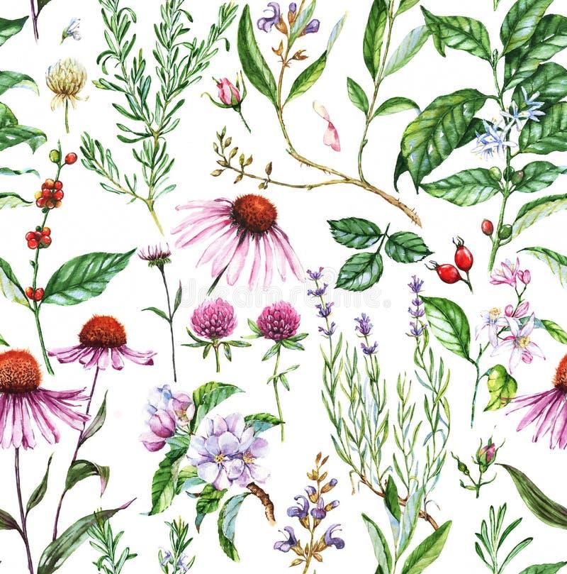 Hand-dragen sömlös botanisk modell för vattenfärg med olika växter stock illustrationer