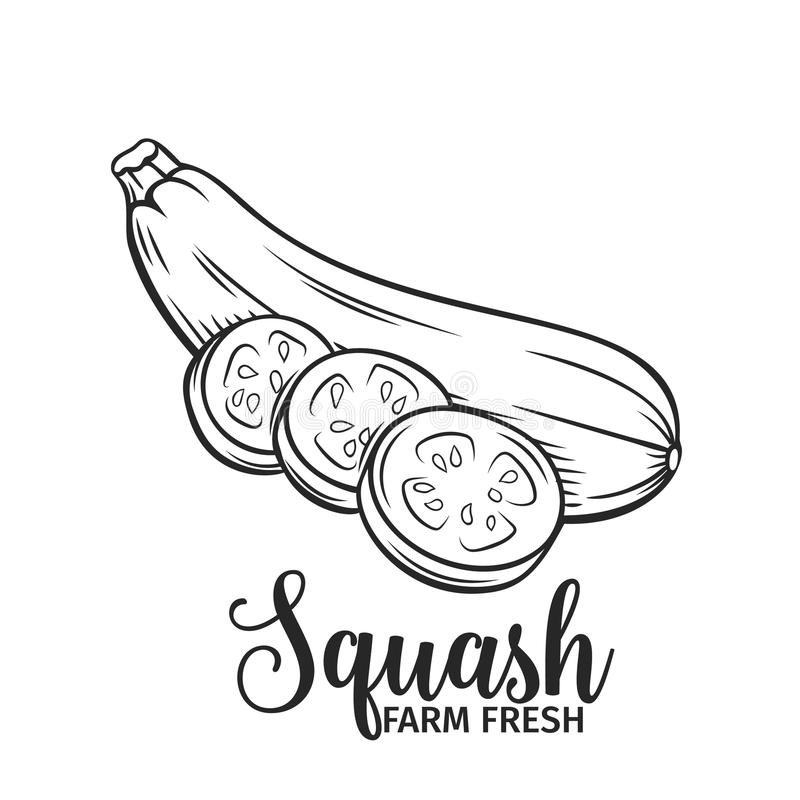 Hand dragen squashsymbol royaltyfri illustrationer