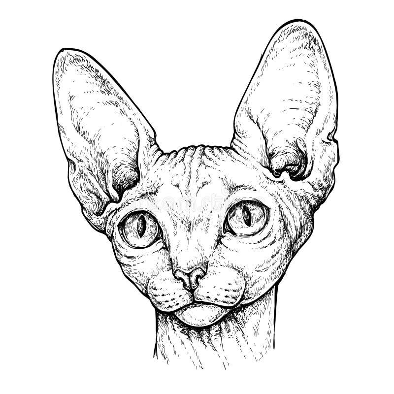 Hand dragen stående av den gulliga sfinxkatten Vektorillustration som isoleras på vit stock illustrationer