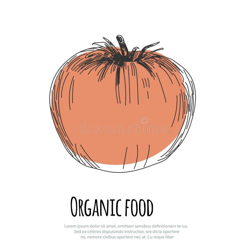 Hand dragen tomat över vit bakgrund royaltyfri illustrationer
