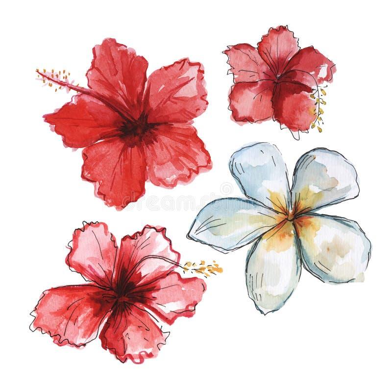 Hand dragen tropisk blommauppsättning för vattenfärg Röd hibiskus och vit Plumeria royaltyfri illustrationer