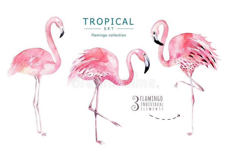 Hand dragen tropisk fågeluppsättning för vattenfärg av flamingo Exotiska fågelillustrationer, djungelträd, Brasilien moderiktig k royaltyfri foto