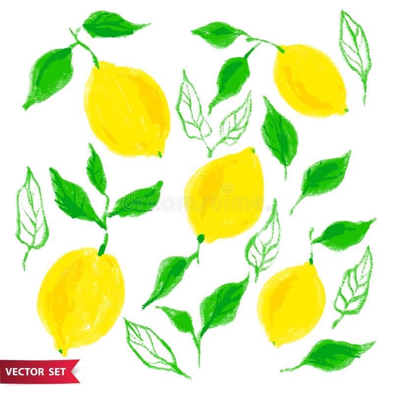 Hand dragen uppsättning av citronfrukt med textur Matbeståndsdelsamling Vektorillustration av citroner med sidor blom- vektor illustrationer