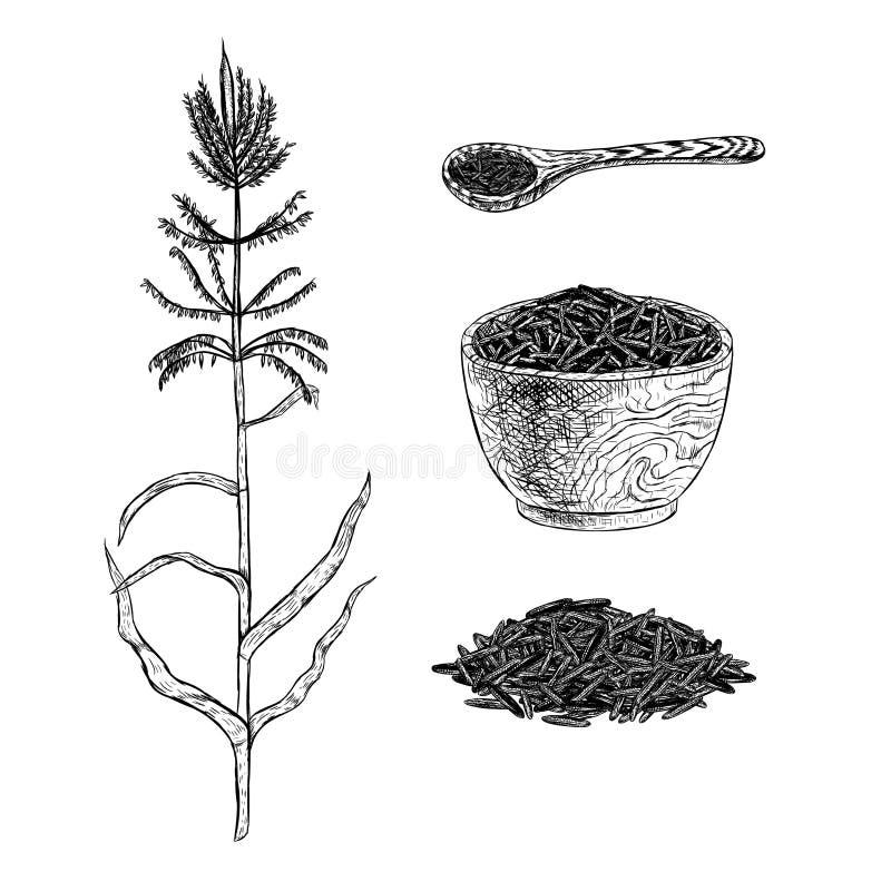 Hand dragen uppsättning av lösa ris Vektorn skissar stock illustrationer