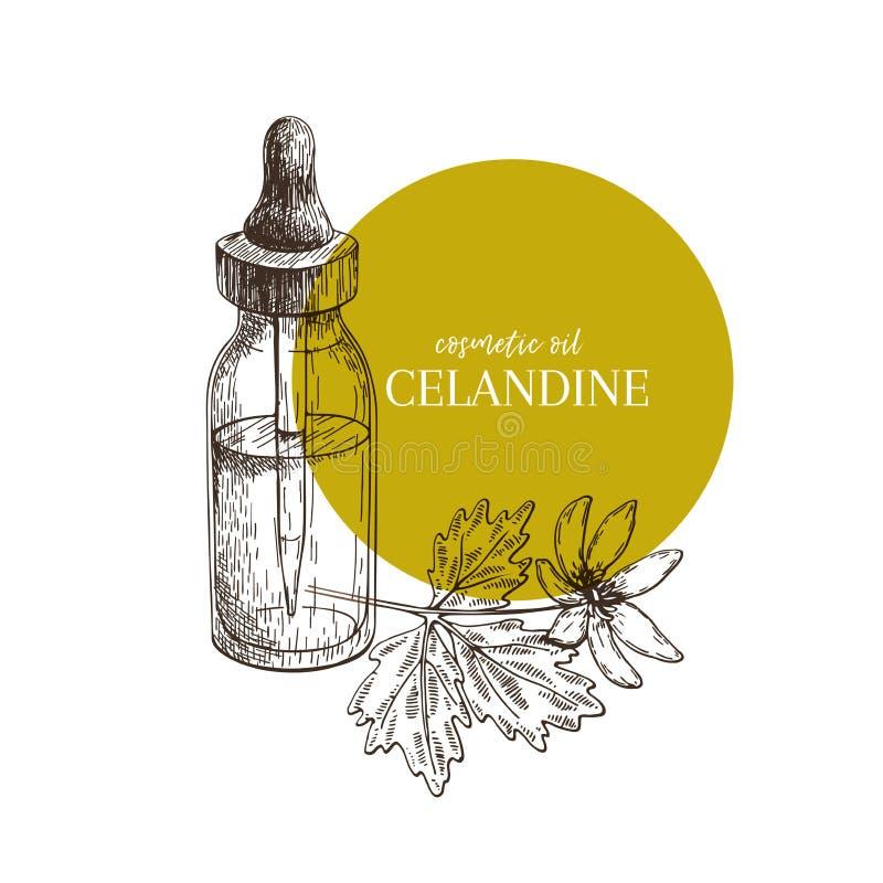 Hand dragen uppsättning av nödvändiga oljor Vektorcelandineblomma Medicinsk ört med den glass droppglassflaskan Inristad konst Go stock illustrationer