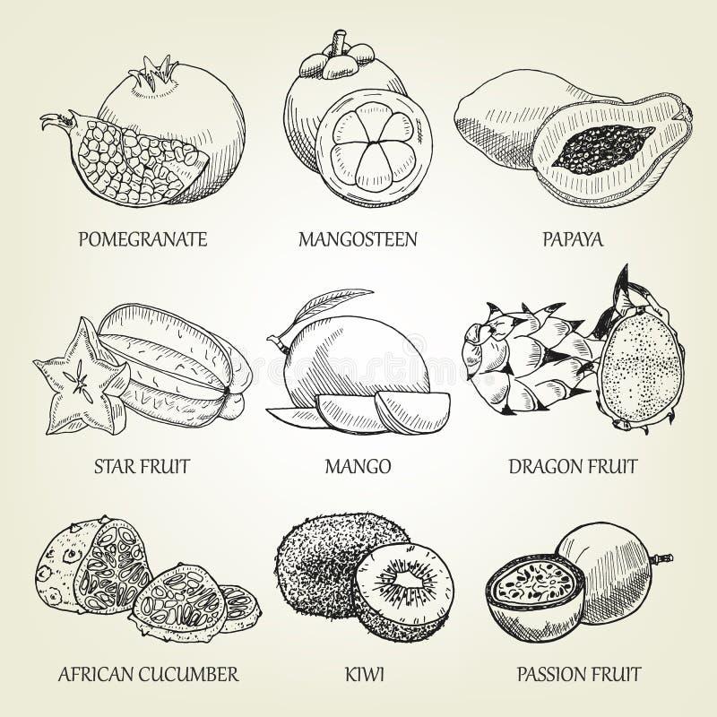 Hand dragen uppsättning av olika tropiska frukter Realistiska symboler för översikt av sund mat royaltyfri illustrationer
