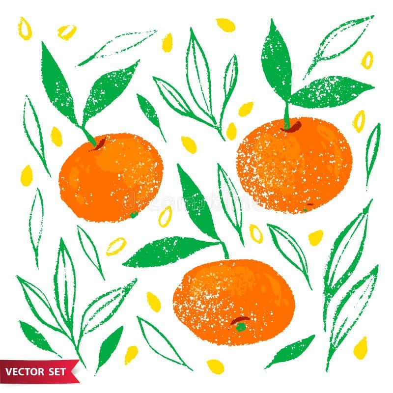 Hand dragen uppsättning av orange frukt med textur Matbeståndsdelsamling Vektorillustration av tangerin med sidor stock illustrationer