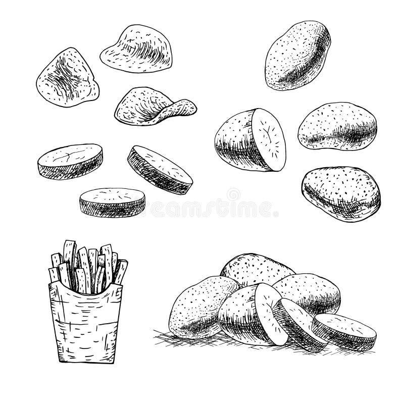 Hand dragen uppsättning av potatisen Vektorn skissar vektor illustrationer