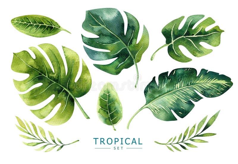 Hand dragen uppsättning för tropiska växter för vattenfärg Exotiska palmblad, j royaltyfria bilder