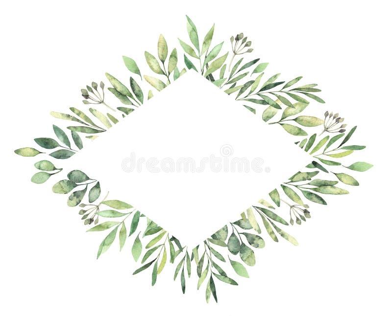 Hand dragen vattenfärgillustration Botanisk rombetikett med stock illustrationer