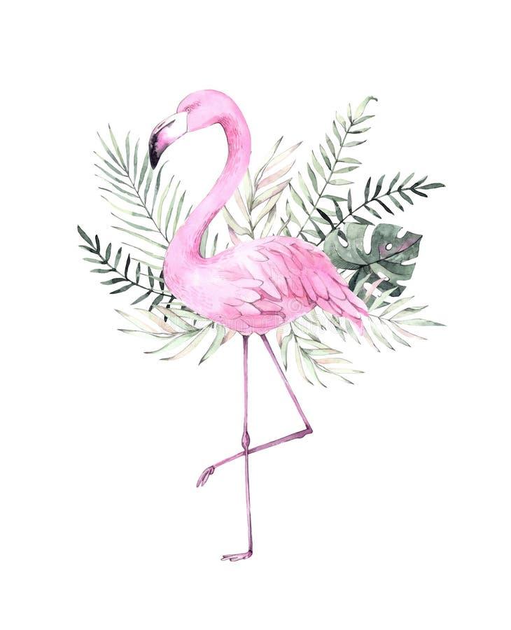 Hand dragen vattenfärgillustration Tryck med den rosa flamingo och vektor illustrationer