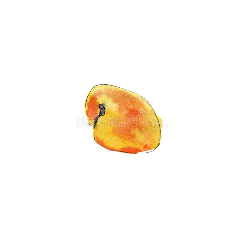 Hand dragen vattenfärgmålning på vit bakgrund Ilustration av fruktaprikons royaltyfri illustrationer