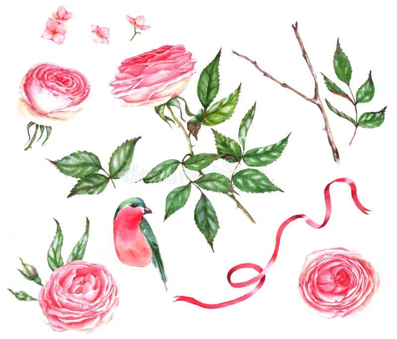 Hand-dragen vattenfärguppsättning av blom- illustrationer - rosor, sidor, filial, fågel royaltyfri illustrationer