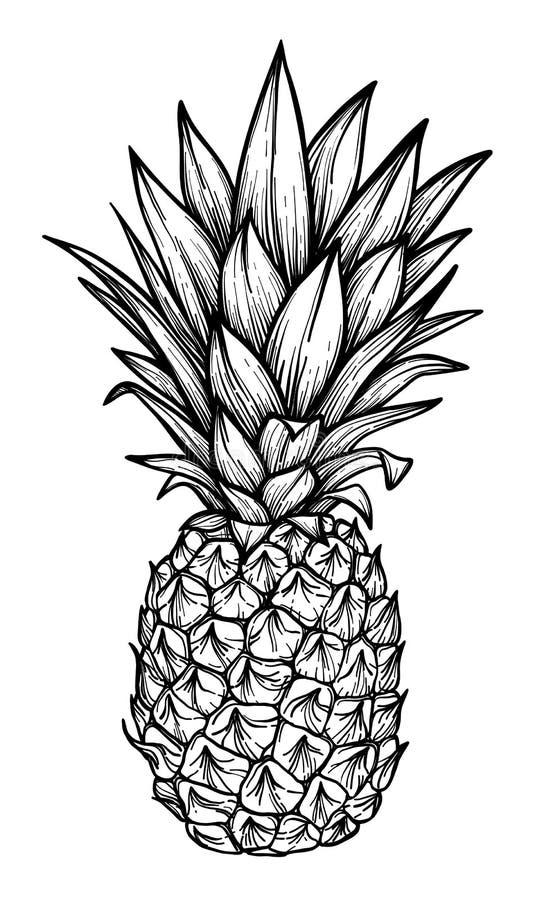 Hand dragen vektorillustration - ananas Exotisk tropisk frui vektor illustrationer