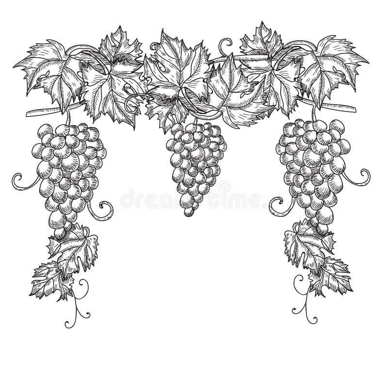 Hand dragen vektorillustration av filialdruvor Vinrankan skissar isolerat på vit bakgrund stock illustrationer