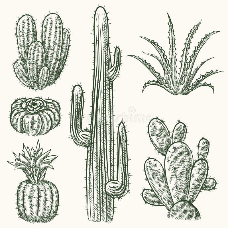 Hand dragen vektorkaktus royaltyfri illustrationer