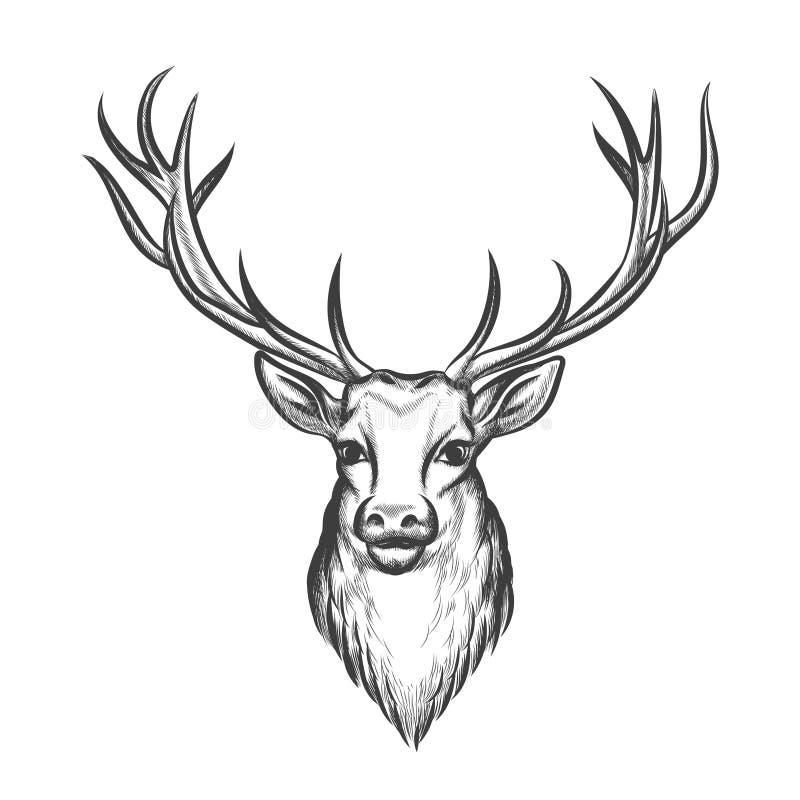 Hand dragit hjorthuvud royaltyfri illustrationer