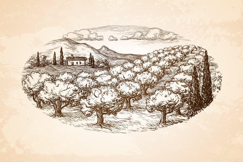 Hand dragit landskap för olivgrön dunge stock illustrationer