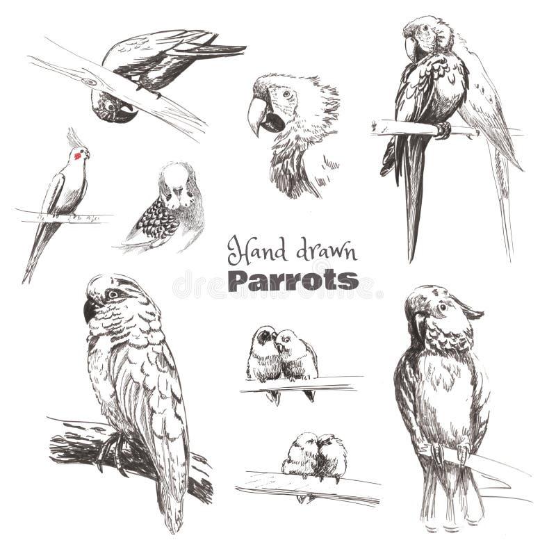 Hand-dragit skissa fåglar Monokromma svartvita papegojor: undulat kakadua, ara, corella, dvärgpapegoja, jaco royaltyfri illustrationer