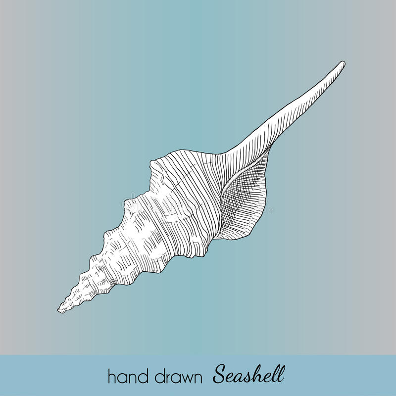 Hand dragit vektorsnäckskal Nautisk illustration för loppkort royaltyfri foto