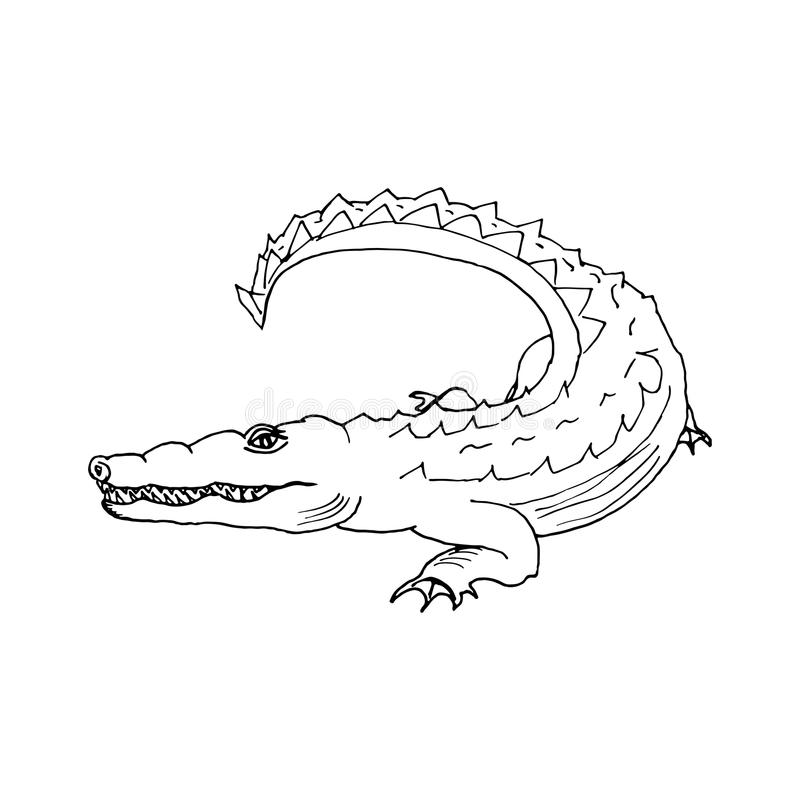 Hand draw a crocodile-style sketch on a black and royalty free illustration