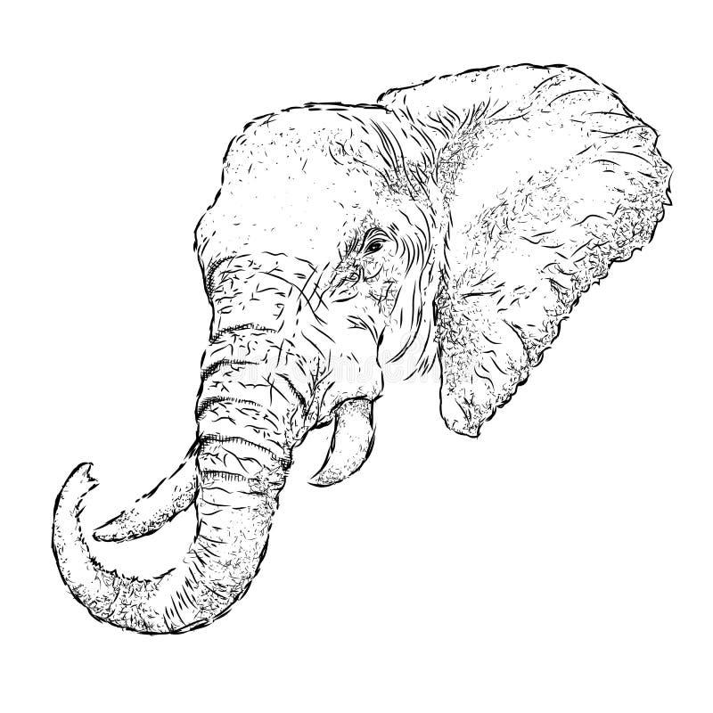Free Hand Draw Elephant Portrait. Hand Draw Vector Illustration Stock Photo - 70981460