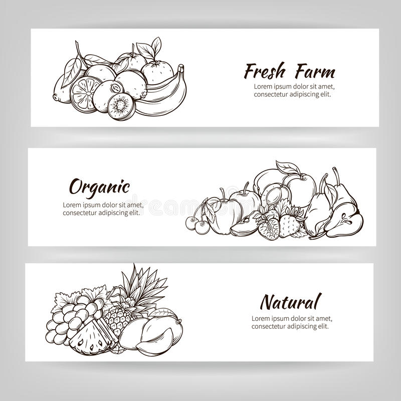 Hand draw fruits banner royalty free illustration
